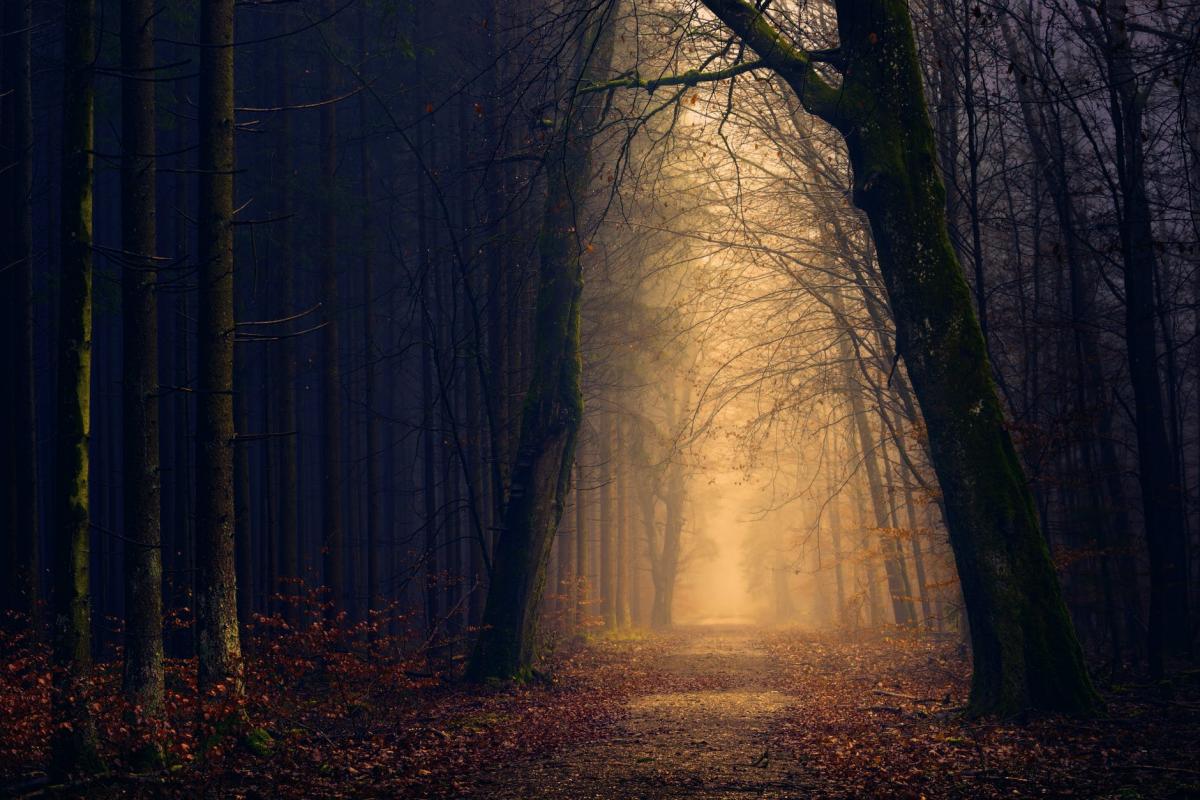 Prey for Dawn: A Wicked Horror Novel